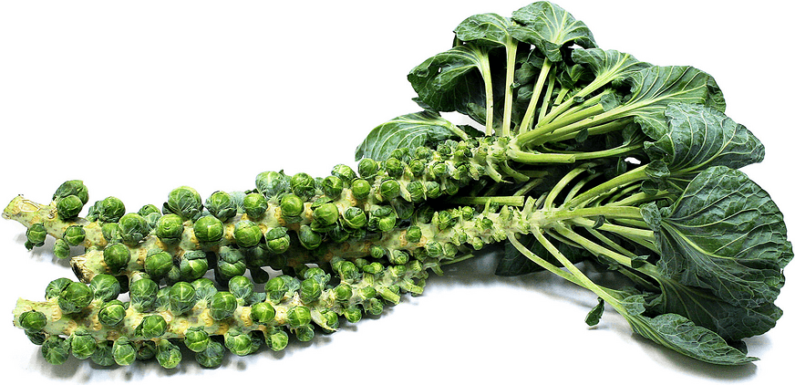 Natures Perfect Food, Brussels Sprouts For Your Health
